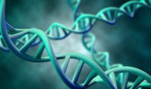 genetiche catene dna