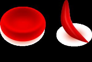globuli scd